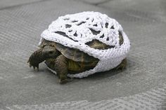 Crochet cozy for a turtle.  WTF???  Lol!