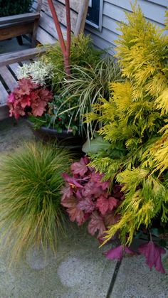 Cherry's garden in British Columbia--Click through to see more of this garden!