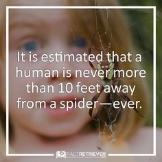 There are over 1 million spiders per acre of land.