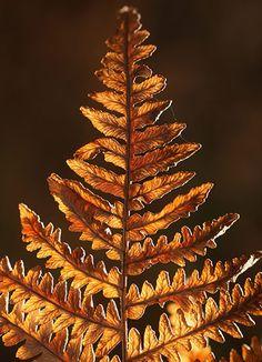 glowing copper fern frond