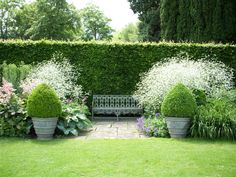 A Victorian cast iron bench is set off by the frothy Crambe cordifolia and the box topiary to either side at Anglesey Abbey (?) Well drained soil, plant top of pot level with ground Formal Gardens, Unique Gardens, Back Gardens, Beautiful Gardens, Outdoor Gardens, Moon Garden, Dream Garden, Garden Borders, Garden Cottage