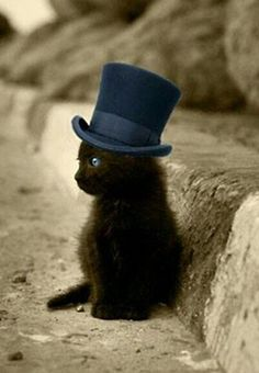 Kitten with a hat