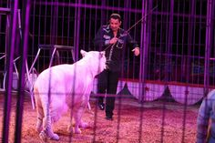 La organización internacional para la protección de animales Animal Defenders International (ADI) realiza una gira nacional para apoyar el proyecto de ley 244 de 2012 que pretende prohibir el uso de animales en los circos en toda Colombia. Este ya fue debatido y aprobado por unanimidad en la Cámara de Representantes. http://www.eluniversal.com.co/cartagena/local/colombia-libre-de-circos-con-animales-foro-en-la-udec-109374