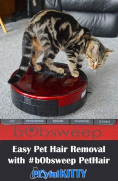 Got pet hair? I do. #bObsweepPetHair from Bobsweep is helping my floors to get cleaner! #HappySweeping #sponsored