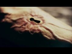 [VIDEO] 'American Horror Story: Hotel' — Season 5 Spoilers | TVLine