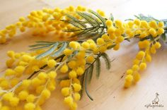 "Yellow Acacia Blossoms Each stem measures approx. 22"" in length. The listing is for ONE stem  {Perfect for} - bridal bouquet, corsage, boutonniere, headpiece and wedding crown - hair piece and jewellery making - gift packaging - wedding, anniversary, birthday, party and holiday decorating Handpicked by Gingertails from Hong Kong.  -----------  {Larger Quantity} Please contact us if you're interested in ordering a larger amount than what is listed."