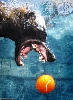 photos under the water when a dog fetches...