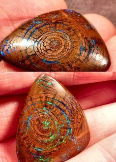 A rare opal, sprouting in a piece of petrified wood.