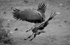 Aerial Combat by Craig Simonetti