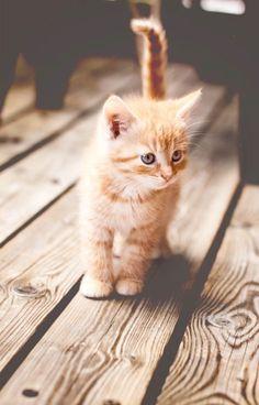 Untitled Pretty Cats, Beautiful Cats, Animals Beautiful, Beautiful Beach, Cute Fluffy Kittens, Cute Cats And Kittens, Orange Kittens, Adorable Kittens, Kittens Playing