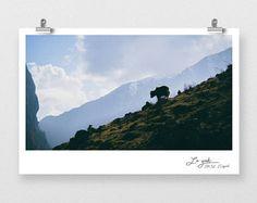 Yak and mountain | Fine Art Photo Print, Nepal, Himalayas, wildlife Silouhette, 8x12, Panoramic Lo Fi | blue print 12x36, Nature large Pano