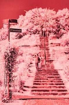 red sunday #kurparkoberlaa #vienna #wien #infrared #infrarot #red #rot #summer #sommer #filmstadt Vienna, Sunday, Abstract, Artwork, Summer, Red, Movie Posters, Pictures, Summary