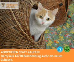 Aus der Katzenhölle wurden 31 Katzen geborgen - darunter Darcy.  http://www.tierheimhelden.de/katze/tierheim-brandenburg/tuerkisch_van/darcy/5156-1/  Darcy ist ein schüchternes, Artgenossen verträgliches Mädchen, welches gerne die Vorzüge einer großen Wohnung oder sogar Freigang genießen würde. Gechipt, kastriert und unter einem Jahr jung ist die Katzendame bereit zum Umzug