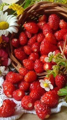 Widl Strawberries. Metsmaasikad. Zdjęcie