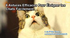 Vous en avez marre des chats errants qui urinent dans votre jardin ? Voici 6 astuces efficaces pour les faire décamper vite fait ! Mais bien sûr sans les blesser :-)  Découvrez l'astuce ici : http://www.comment-economiser.fr/eloigner-les-chats.html?utm_content=bufferfc06d&utm_medium=social&utm_source=pinterest.com&utm_campaign=buffer