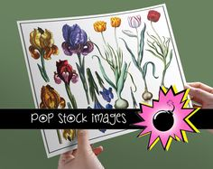 Spring Flowers Digital Collage Sheet with Iris and Tulips - $1.50    Brightly colored Spring flowers adorn these collage sheets - they feature Iris blooms and a trio of tulips that will look lovely in all of your creative projects.