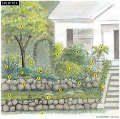 Edible Landscaping with eye appeal ~ suggestions on how to make edible gardens look pretty instead of boxy