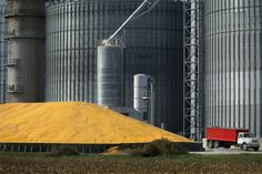 Genetically Engineered Crops Are Safe, Analysis Finds - The New York Times