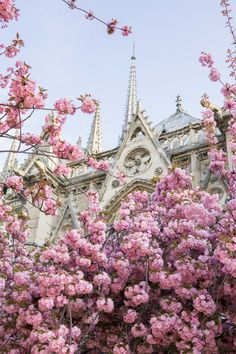 Discover where and when to find cherry blossoms with this floral filled, Paris travel guide. Beautiful Landscape Photography, Beautiful Landscapes, Photography Workshops, Travel Photography, Cherry Blossom Season, Cherry Blossoms, Beautiful Wallpaper Photo, Gothic Style Architecture, Wonderful Places