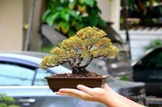 Bonsai Art, Tree Branches, Flora, Art Pieces, Herbs, Plants, Artworks, Art Work, Herb