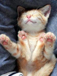 Happy Sleeping Kitty