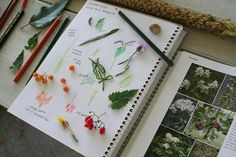 nature journal. have a class one where the children add found materials and write the story