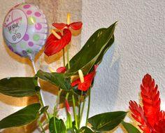 Floristerias de Valencia y envio de flores a domicilio en Valencia