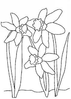 Daffodil, : Wild Daffodil Coloring Page