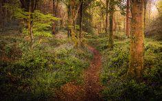 Pathways of Idless - David Haughton
