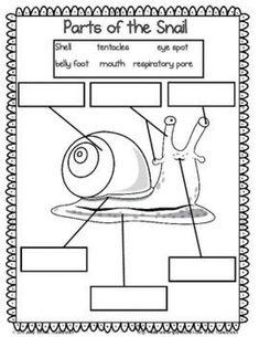 Check out this Snail nonfiction unit! It includes a