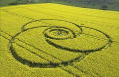 crop circles argentina - Buscar con Google