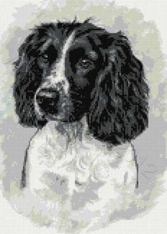 Handcrafted Original Drawing Of A Springer Spaniel Not