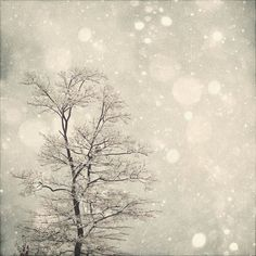 Winter Art First Snow 8x8 Fine Art Photography by MarianneLoMonaco