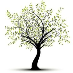 sagoma albero: Albero verde su sfondo bianco Vettoriali