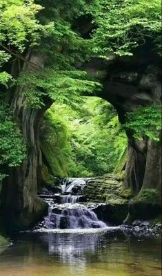 Tree arch over stream