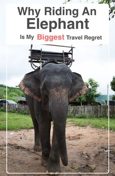 Why Riding An Elephant Is My Biggest Travel Regret Travel Images, Travel Pictures, Solo Travel, Travel Usa, Thailand Elephants, Image Fashion, Single Travel, Responsible Travel, Go Outdoors