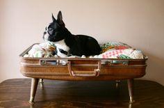 8 buenas ideas de camas originales para mascotas - Todo mascotas
