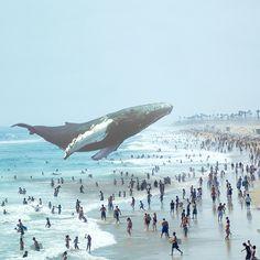 Magic Leap Whale