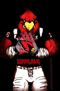 Bird Gang!!! Louisville Logo, University Of Louisville, Arizona Cardinals Football, Louisville Cardinals, Football Love, Football Season, Arizona Cardinals Wallpaper, Az Cards, Birds Pics