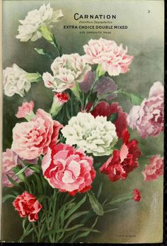 1914 - Seed annual 1914. - Biodiversity Heritage Library