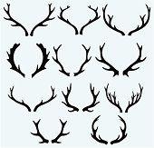 Deer Antlers 3