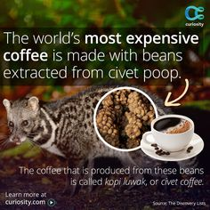 In Thailand, elephant dung is used to make paper. Learn 5 surprising uses for poop.
