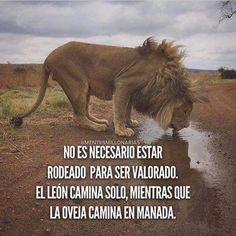 ¿Qué eres, Oveja o León?