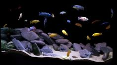 slate aquarium - Google Search Goldfish Aquarium, Slate Rock, Diy Kits, Natural Stones, Pet Supplies, Organic, Pets, Purple, Fish Tanks