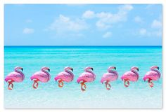 Gray Malin, Flamingo Balloons - Gray Malin - Brands One Kings Lane Flamingo Party, Flamingo Print, Pink Flamingos, Red Balloon, Mylar Balloons, Amazing Hd Wallpapers, Phone Wallpapers, Desktop, Room Tour