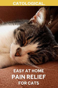 If you can't schedule an appointment soon enough, there are a few safe pain reliever for cats that you can try as a stopgap measure at home. Remember, though, they're only temporary and are no substitute by a vet.#CatHealth #CatCare #AtHomeCatCare #PainReliefForCats Baby Kittens, Cats And Kittens, Cat Cpr, First Time Cat Owner, Cat Health Care, Cat Ages, Kitten Care, Cat Care Tips