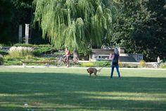 freude am spazieren - hund u. herrin