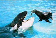 cute seal feeding a whale