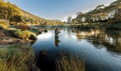 Thredbo diggings campsite. A fly fisherman casting his fly in the Thredbo river. Photo:Murray Vanderveer Copyright:NSW Government