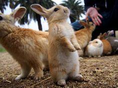 Bunny Island, Rabbit Island, Animals And Pets, Baby Animals, Cute Animals, Wild Animals, Hamsters, Cute Baby Bunnies, Cute Babies